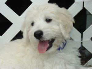 Milo, Canine Assistant